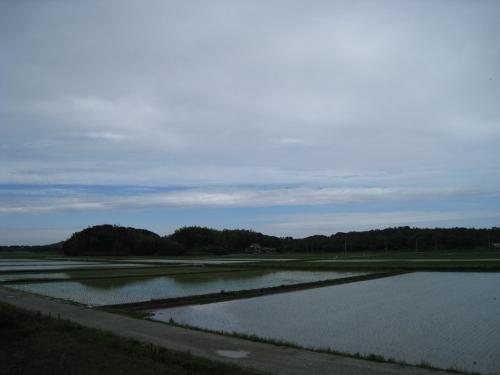 田植えの季節
